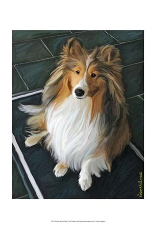 Sheltie Bred to Bark by Robert McClintock art print