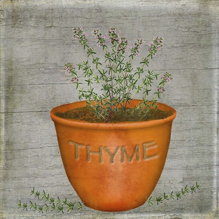 Herb Thyme by Beth Albert art print