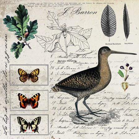 Botanical Bird by Andrea Haase art print