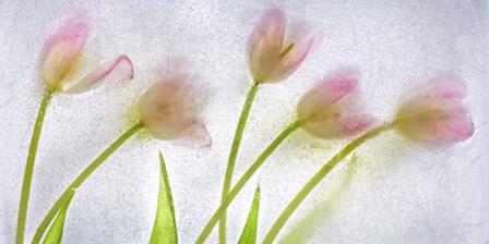 Flores Congeladas 3646 by Moises Levy art print