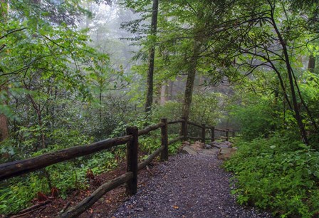 Misty Trail by Bob Rouse art print