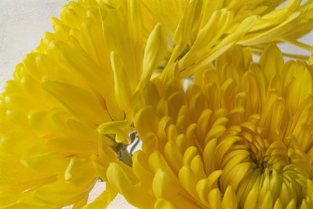 Cremon Yellow Flowers by Bob Rouse art print