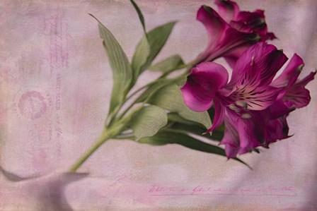 Forever Fuchsia by Bob Rouse art print