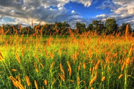 Late Summer Grass by Robert Goldwitz art print