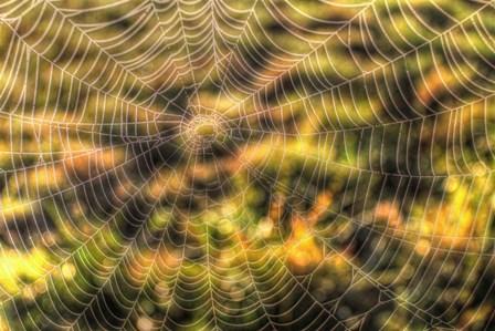 Morning Web by Robert Goldwitz art print