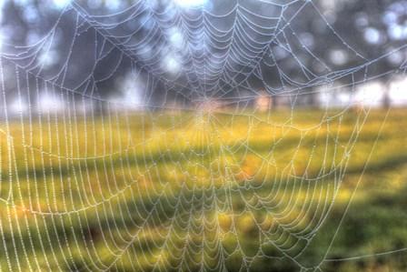 Paddock Web by Robert Goldwitz art print
