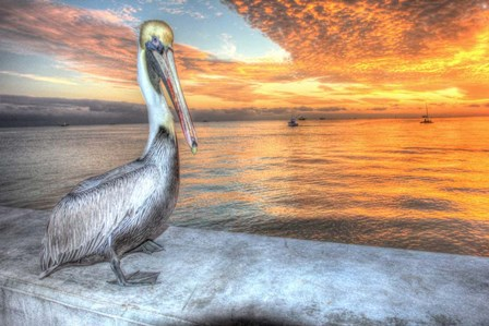 Pelican And Fire Sky by Robert Goldwitz art print