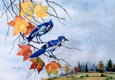 Blue Jays by Arie Reinhardt Taylor art print