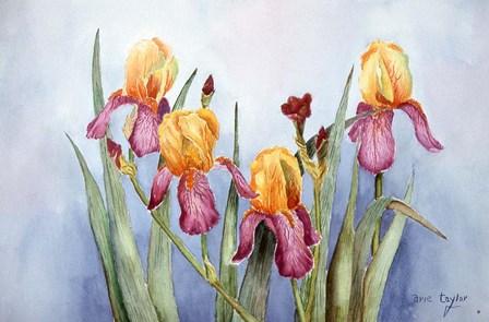 Irises Four by Arie Reinhardt Taylor art print