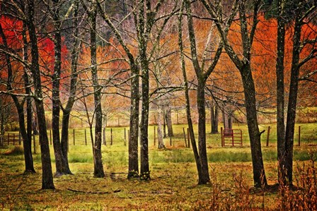 Autumn Grove by Celebrate Life Gallery art print