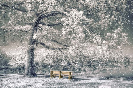 I Will Wait for You in Winter by Celebrate Life Gallery art print