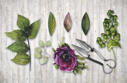 Botanica by Tina Lavoie art print