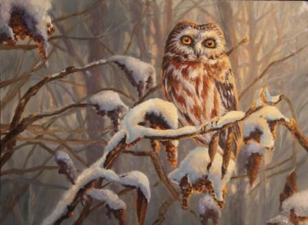 Sawwhet Owl by Wanda Mumm art print
