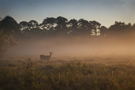 Deer at Daybreak by Wiff Harmer art print