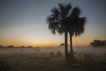 Foggy Palm by Wiff Harmer art print