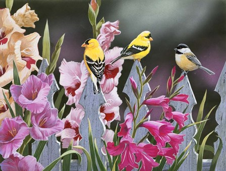 Feathered Friends and Gladiolus by William Vanderdasson art print